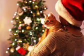 Red cat in hands near Christmas tree — Foto Stock