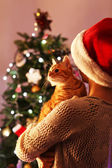 Red cat in hands near Christmas tree — Stock Photo