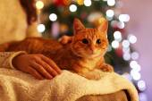 Červená kočka doma v době Vánoc — Stock fotografie