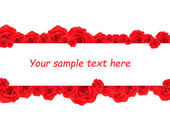 Beautiful rose flowers and card with space for your text isolated on white — Стоковое фото
