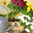 Rustic table with flowers, pots, potting soil, watering can and plants. Planting flowers concept — Stock Photo #61312063