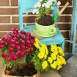 Flowers in pot on chair, potting soil, watering can and plants on floor on bricks background. Planting flowers concept — Stock Photo #61312081