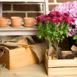 Flowers in wooden box, pots and garden tools on bricks background. Planting flowers concept — Stok fotoğraf #61312093