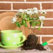 Flowers in wooden box, pots and garden tools on bricks background. Planting flowers concept — Stok fotoğraf #61312097