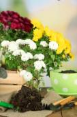 Rustic table with flowers, pots, potting soil, watering can and plants. Planting flowers concept — Stock Photo