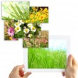 Tablet PC in hands and images of nature objects isolated on white — Zdjęcie stockowe #61327193