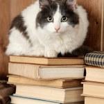 Cute cat sitting on books — Stock Photo #61375327