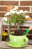 Flowers in pot on stepladder, potting soil, watering can and plants on bricks background. Planting flowers concept — Stock Photo