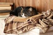 Cute cat lying with book on plaid  — Foto de Stock