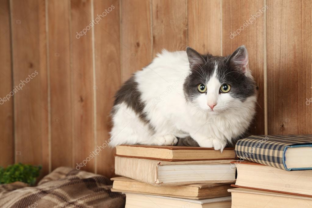 可爱的猫咪坐在 — 图库照片08belchonock#61519741