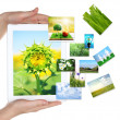 Tablet PC in hands and images of nature objects isolated on white — Zdjęcie stockowe #61522543