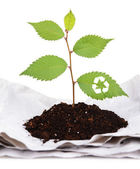 Plant with recycle symbol growing from paper isolated on white — Stock Photo