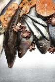 Fresh catch of fish and other seafood close-up — Stock Photo