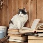 Cute cat sitting on books — Stock Photo #61895573