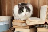 Cute cat sitting on books — Stock Photo