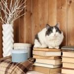 Cat sitting on books — Stock Photo #62219301