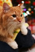 Lovable red cat on Christmas tree background — Foto Stock