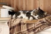 Cute cat with book — Foto de Stock