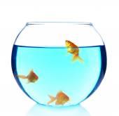 Peixinho no aquário — Foto Stock
