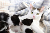 Mother cat and little kittens — Stock Photo