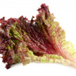 Red lettuce isolated on white — Stock Photo #62300371