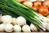 Different raw onion, close up — Stock Photo