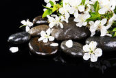 Beautiful fruit blossom — Stock Photo