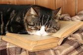Carino gatto sdraiato con libro sul plaid — Foto Stock