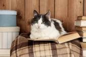 Cute cat lying with book on plaid  — Stock Photo