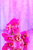 Beautiful orchid on pink background — Stock Photo