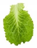 Verde alface isolado no branco — Foto Stock