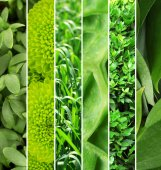 Green color samples collage — Stock Photo