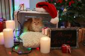 Red cat on pillow no wooden floor and Christmas decoration background — Stok fotoğraf