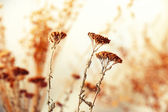 Dried flowers background — Stock Photo
