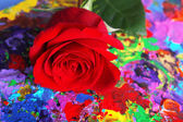 Bella rosa rossa su fondo astratto variopinto — Foto Stock