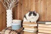 かわいい猫の本の上に座って — ストック写真