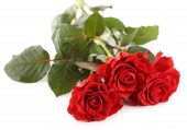 Bouquet of wonderful red roses isolated on white — Stock Photo