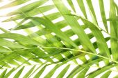 Beautiful palm leaves as background — Stock Photo