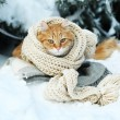 Red cat wrapped with scarf on plaid outdoors in winter time and fir tree background — Stock Photo #63136919
