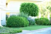 Tree and bushes at park — Stock Photo