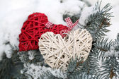 Covered with snow and wicker hearts branch of spruce, outdoors — Stok fotoğraf