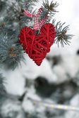 Covered with snow and wicker heart branch of spruce, outdoors — Stok fotoğraf