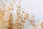 Dried wildflowers on light background — Stock Photo