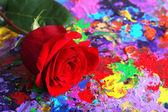 Belle rose rouge sur fond Abstrait coloré — Photo