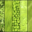 Green color samples collage — Stock Photo #63216161