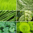 Green color samples collage — Stock Photo #63216265