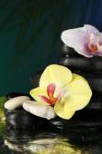 Orchid flowers and pebble stones — Stock Photo