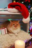 Red cat on pillow no wooden floor and Christmas decoration background — Stock Photo
