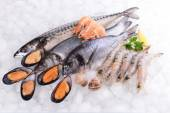 Fresh fish and other seafood on ice — Stock Photo