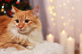 Lovable red cat on lights background — Stock Photo